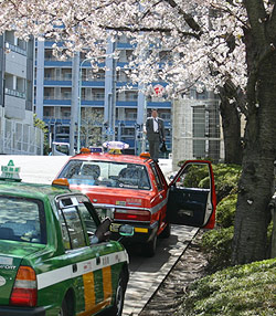 桜とタクシーの写真
