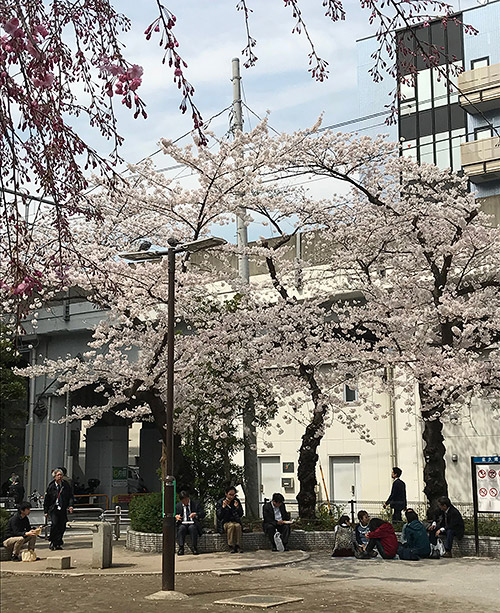 秋葉原の桜 2018